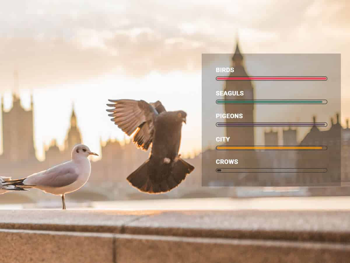 Detect bird species in the photo