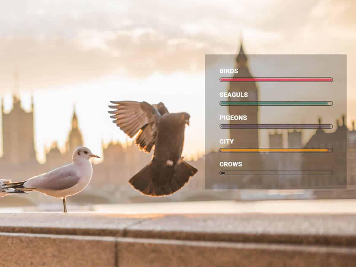 Detect bird species in the photo