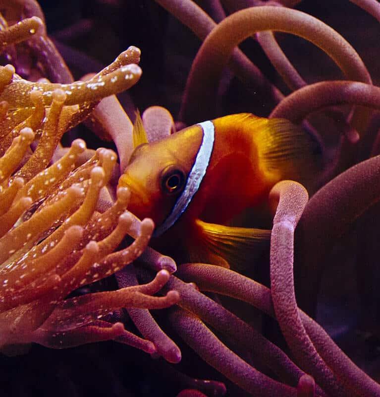 Fish detection