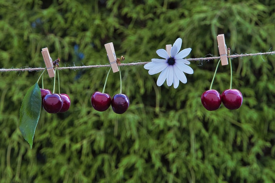Recognition of cherries