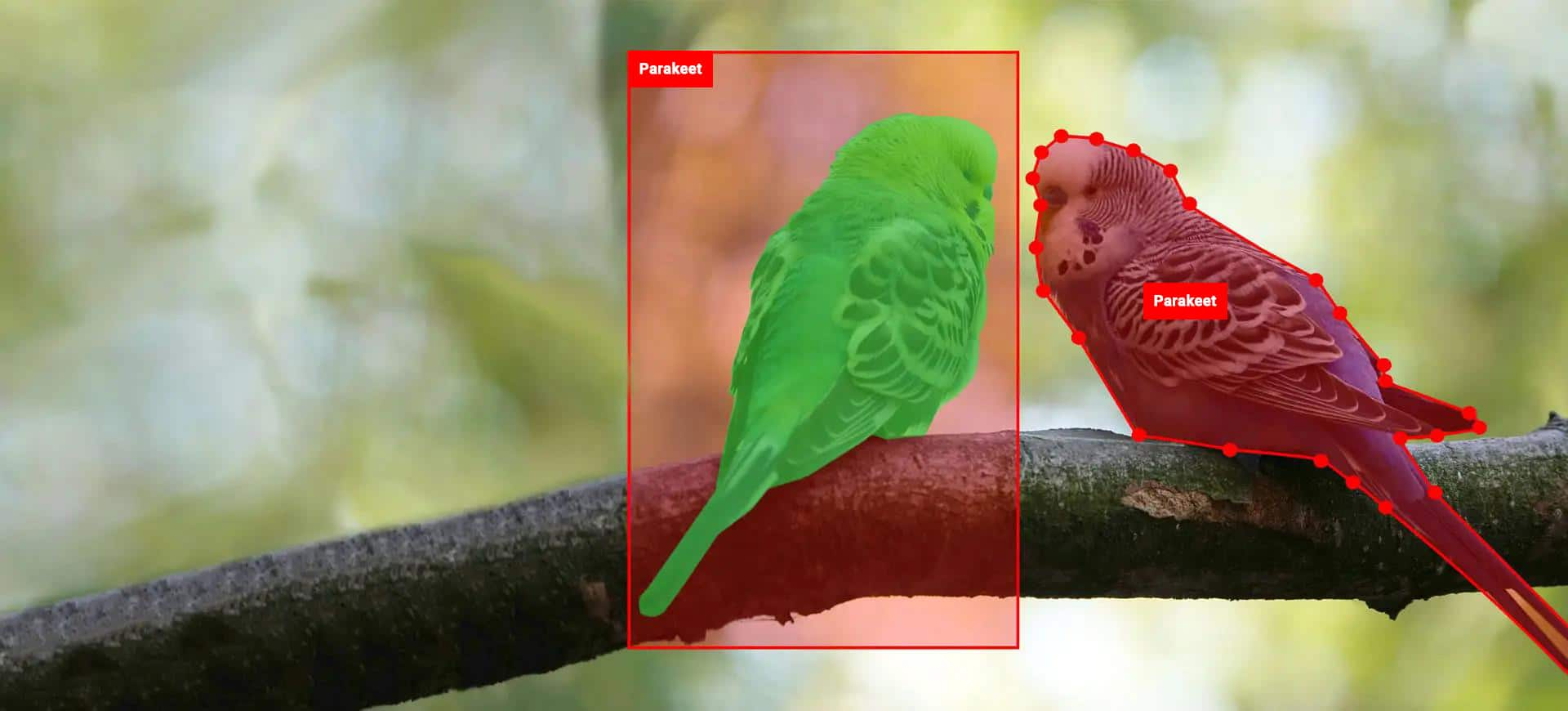 Parakeet detection - bird species detection