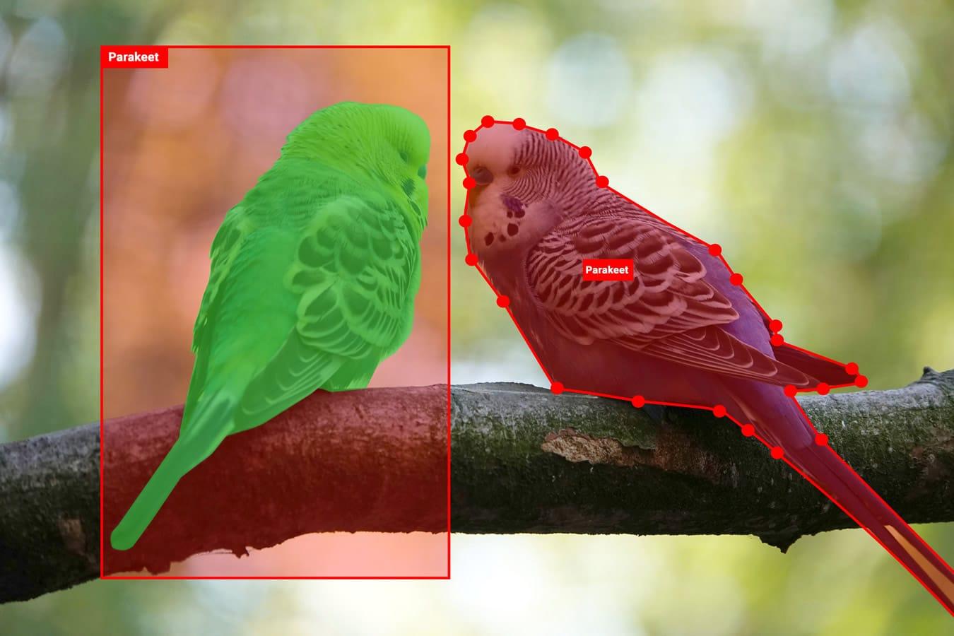 Parakeets - bird detection, labeled birds