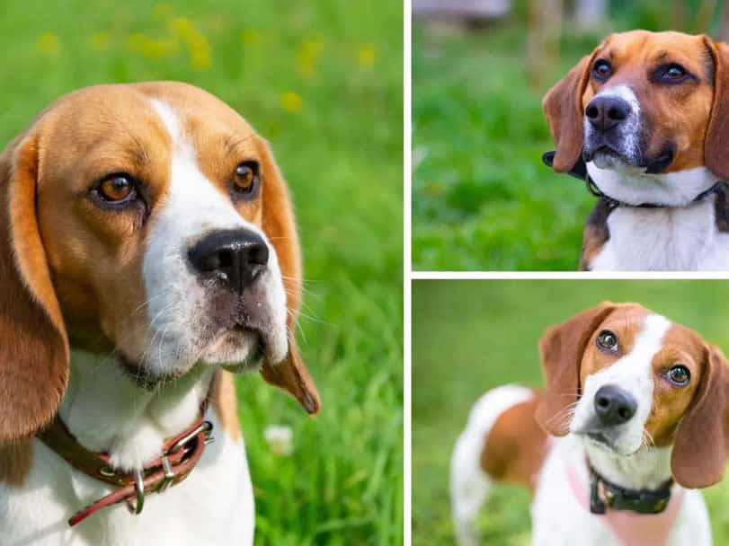 Find similar dogs using similarity search