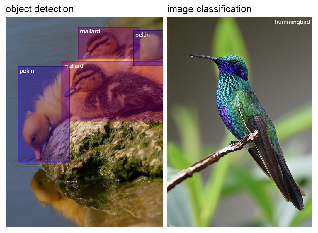 Object detection | image classification