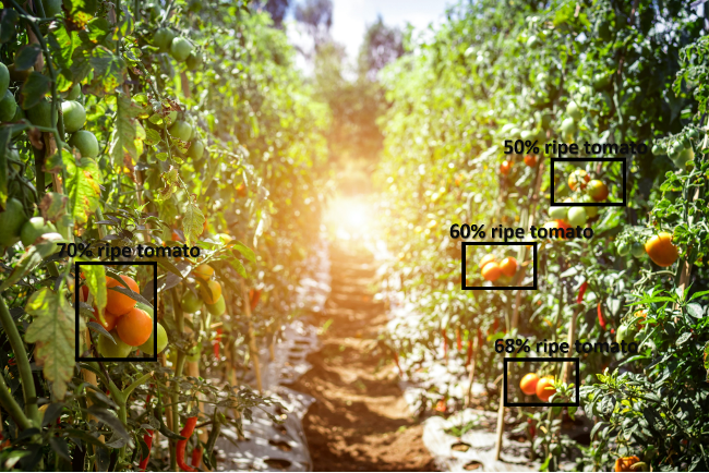 Fruit ripeness detection