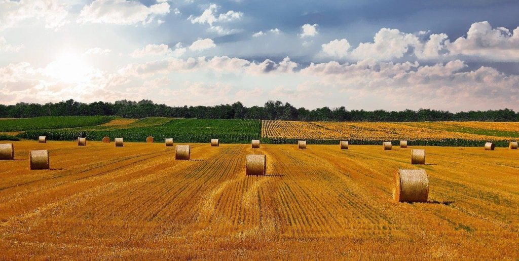 Image recognition software can also be used in agricultural farms